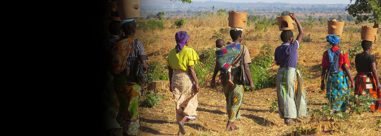 Carrying home improved cookstoves, Kasungu District, Malawi